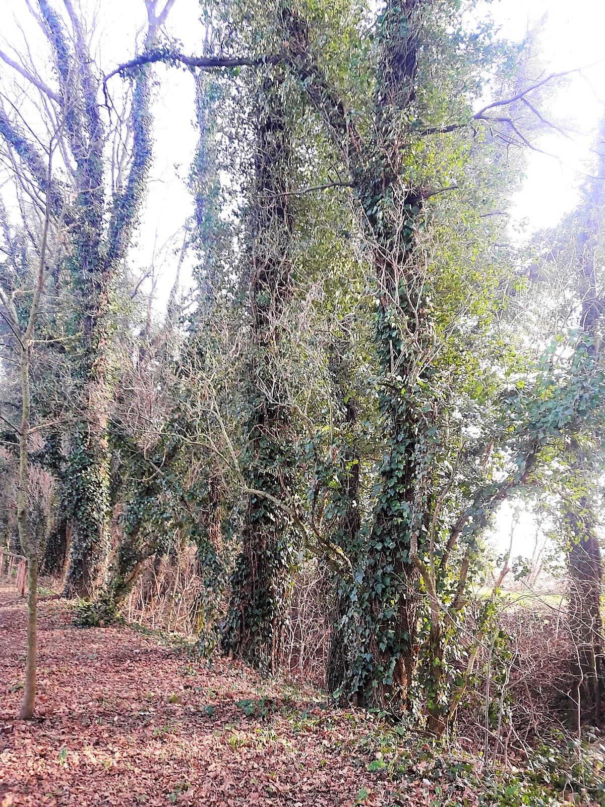 Bosco Wood Wald