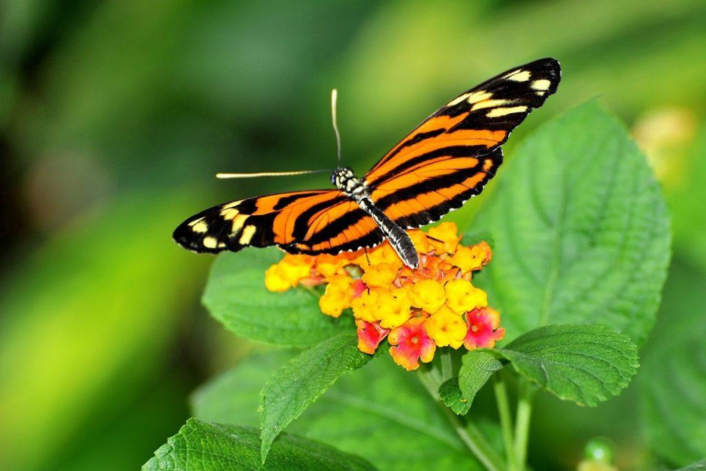 farfalle butterfly Schmetterlingshaus