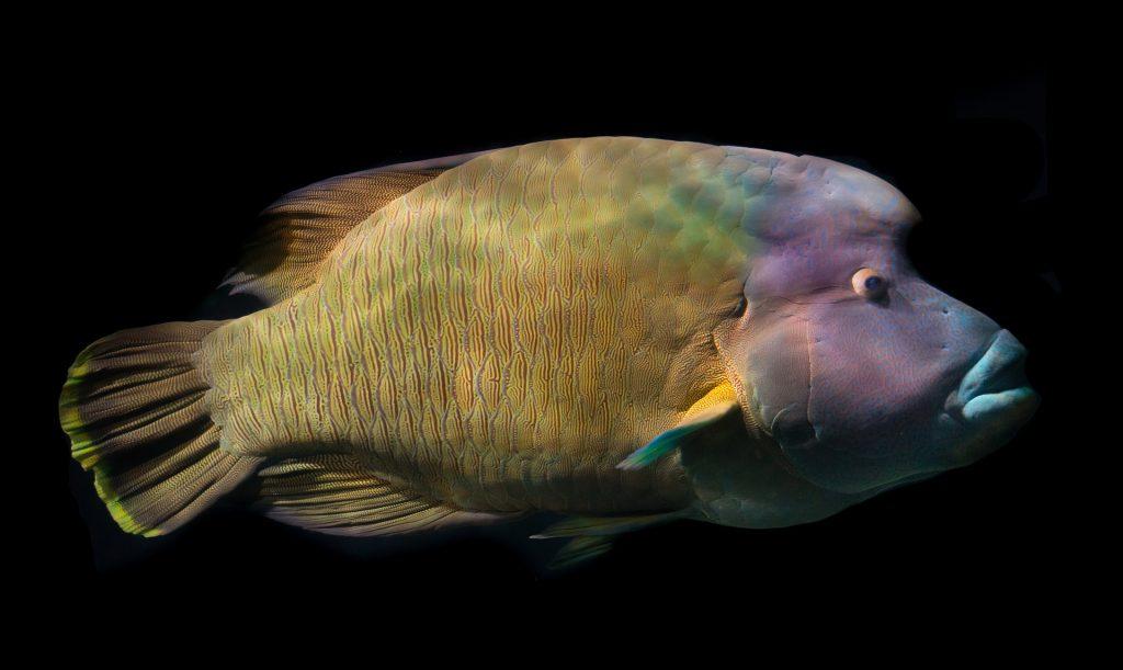 acquario di cattolica aquarium
