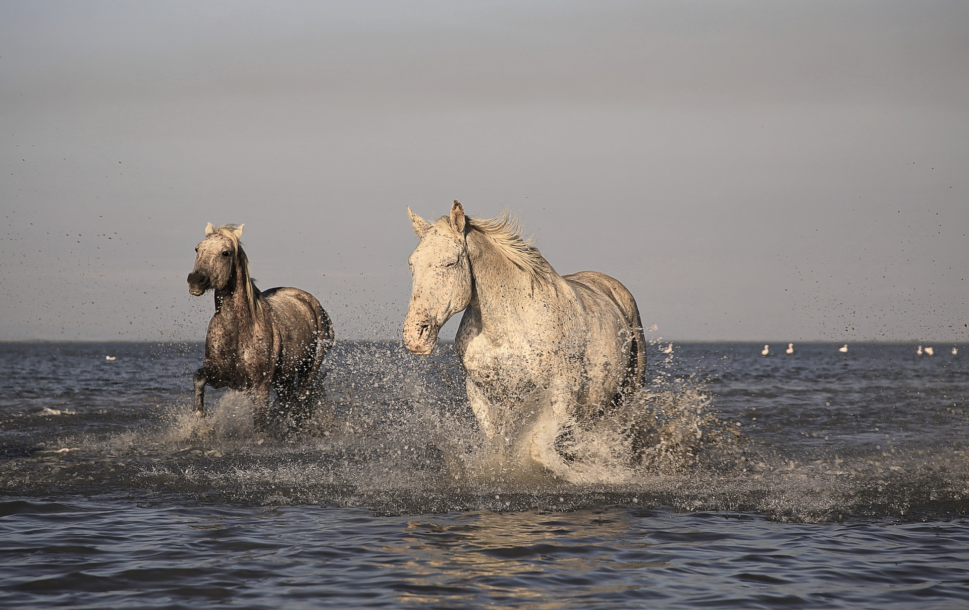 Cavalli Boscoforte