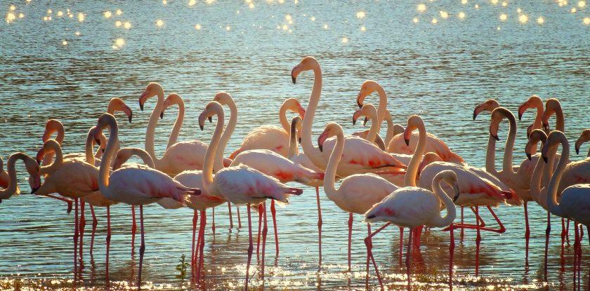pedalata fenicotteri flamingo