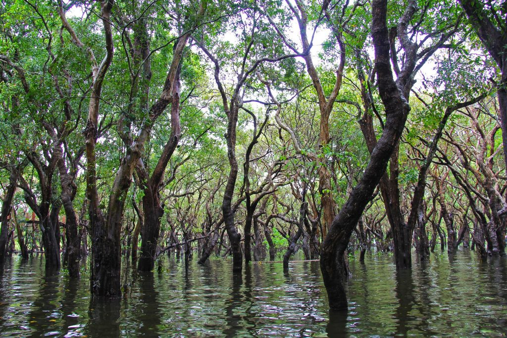 La Foresta allagata