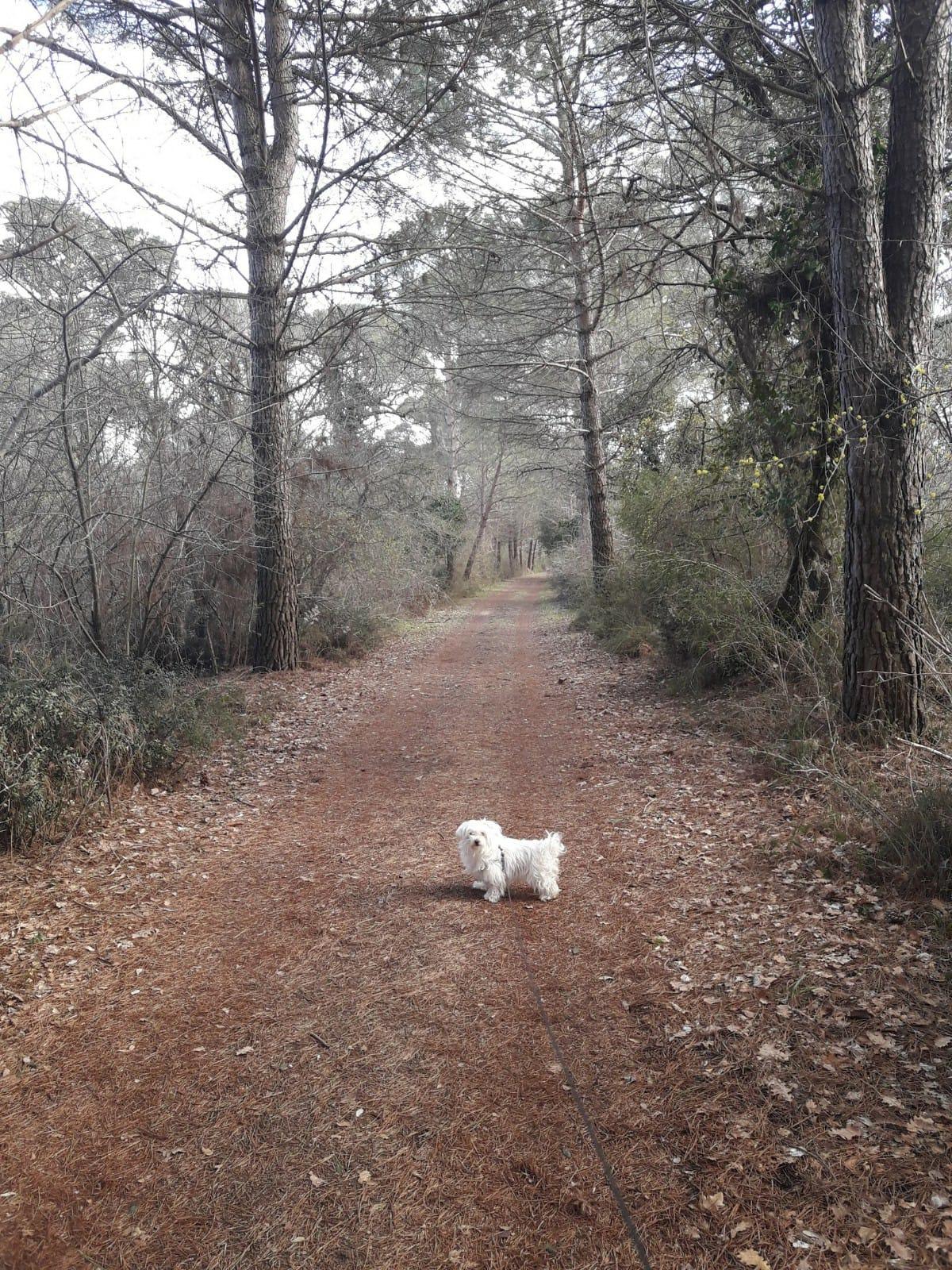querce oaks eichen