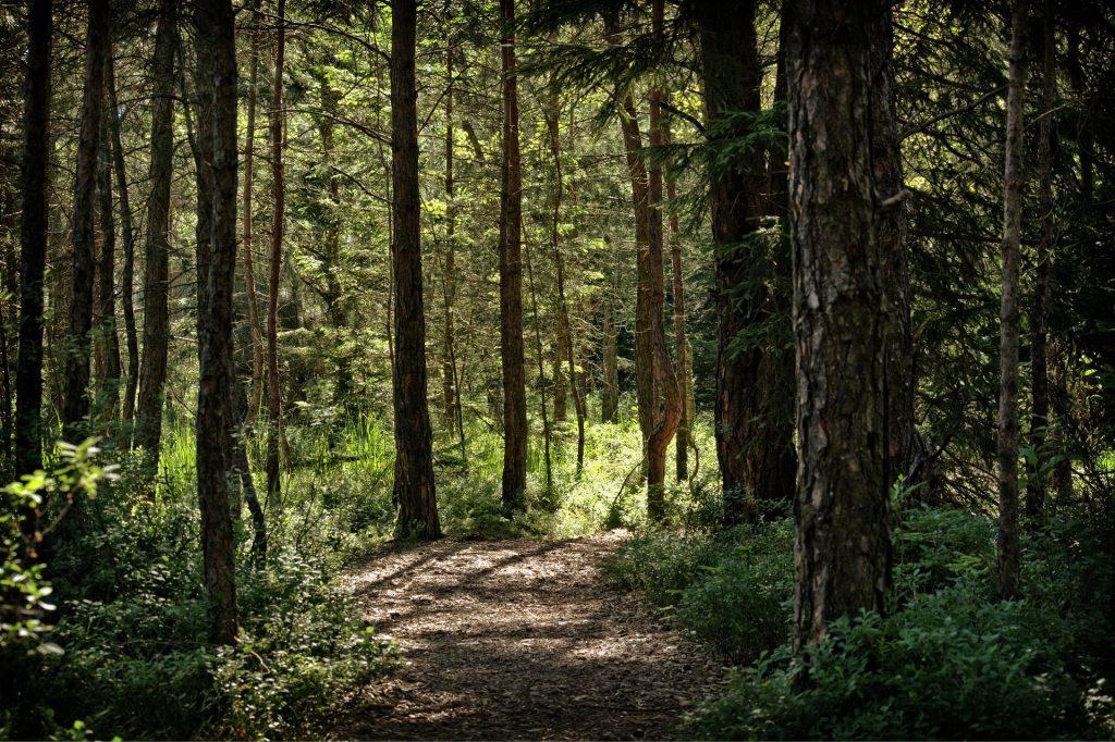 Wild Experience: Nel cuore dell'antica Pineta